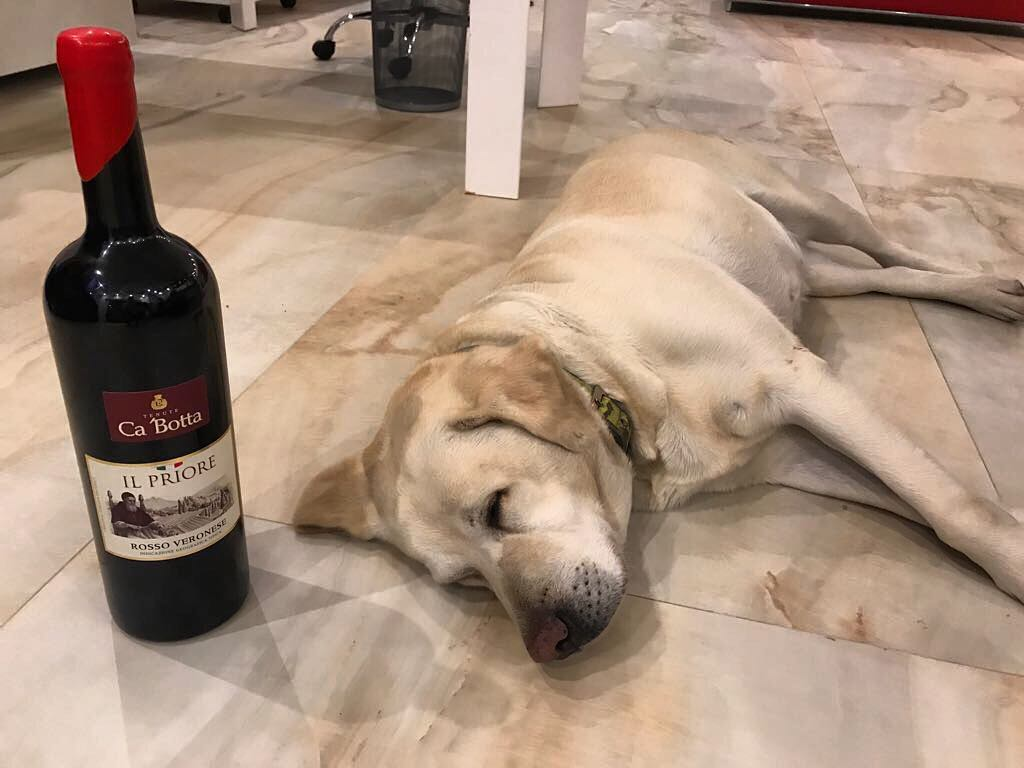 """""""I think the best #wine for relaxing is Il Priore Ca'Botta"""" Draga ?#winerydogs  You can't make wine without a dog ;)"""