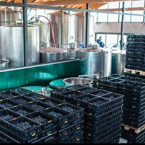 Ca'Botta wines are produced without adding alcohol by means of natural fermentation. Fun fact: it takes around 500-650 to make one bottle of wine!  There are even more fresh grapes in our wine. For example, Amarone bottle contains 2.2 kg of fresh berries, Valpolicella Ripasso 1.8 kg. . Nella produzione dei vini Ca'Botta non si fa uso di alcol. Interessante: occore circa 500-650 chicchi d'uva per produrre una bottiglia di vino!