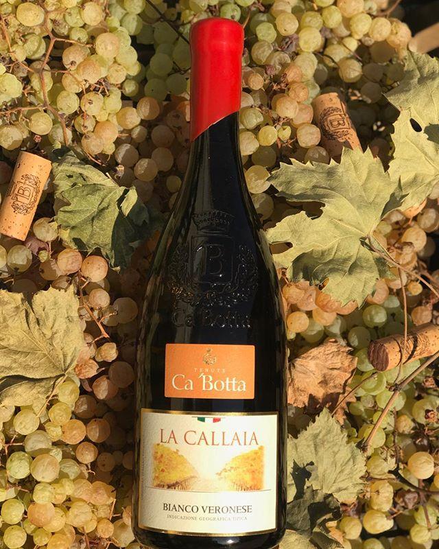 Tra poco a Roma… vino bianco stile Amarone da appassimento