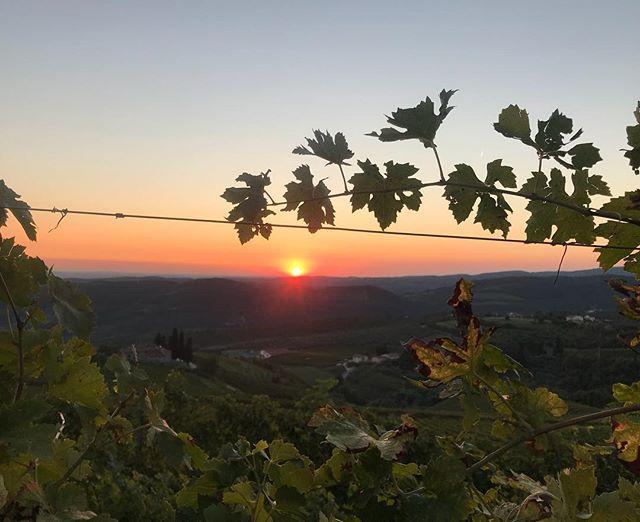 sunset cabotta