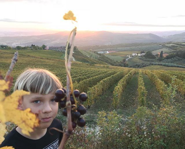Tra le vigne