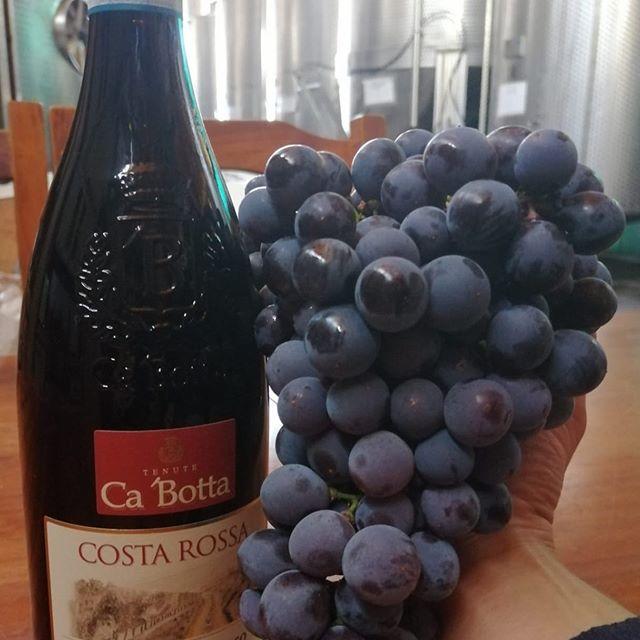 Grappolo del #Corvinone uvaggio  per #Cavotta vini