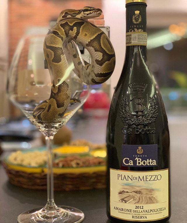 #Cabotta #pitonereale