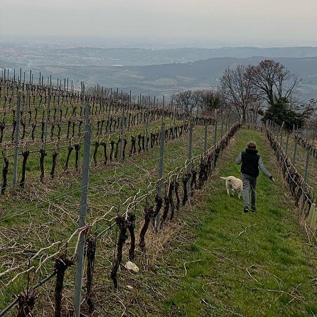 Go Downhill #Cabotta #vineyards