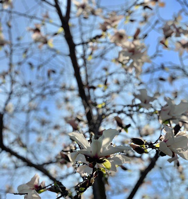 #Primavera #Cabotta