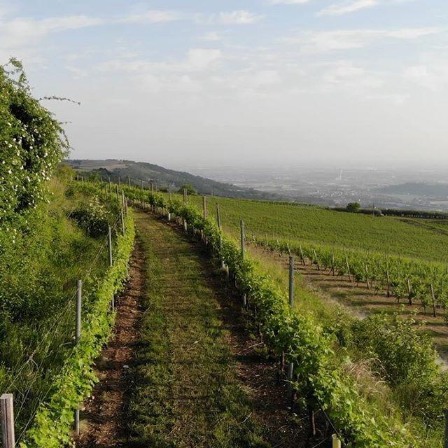 #Cabotta Agricola in Alta #Valpolicella